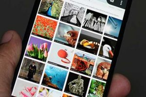 diferentes imágenes en una galería en un dispositivo móvil.